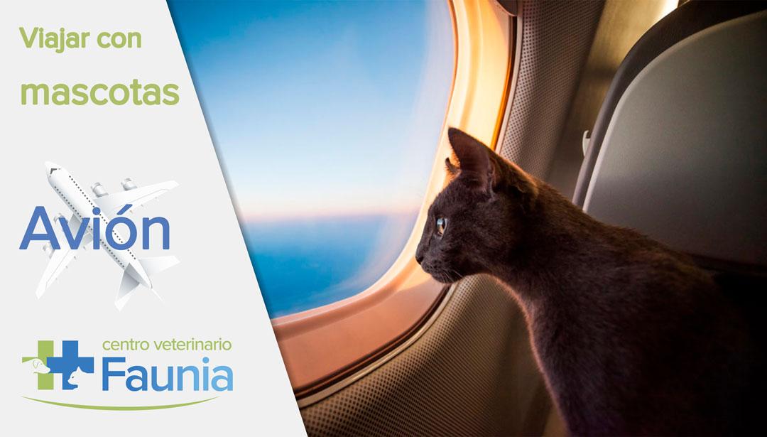 viajar con mascotas - avion