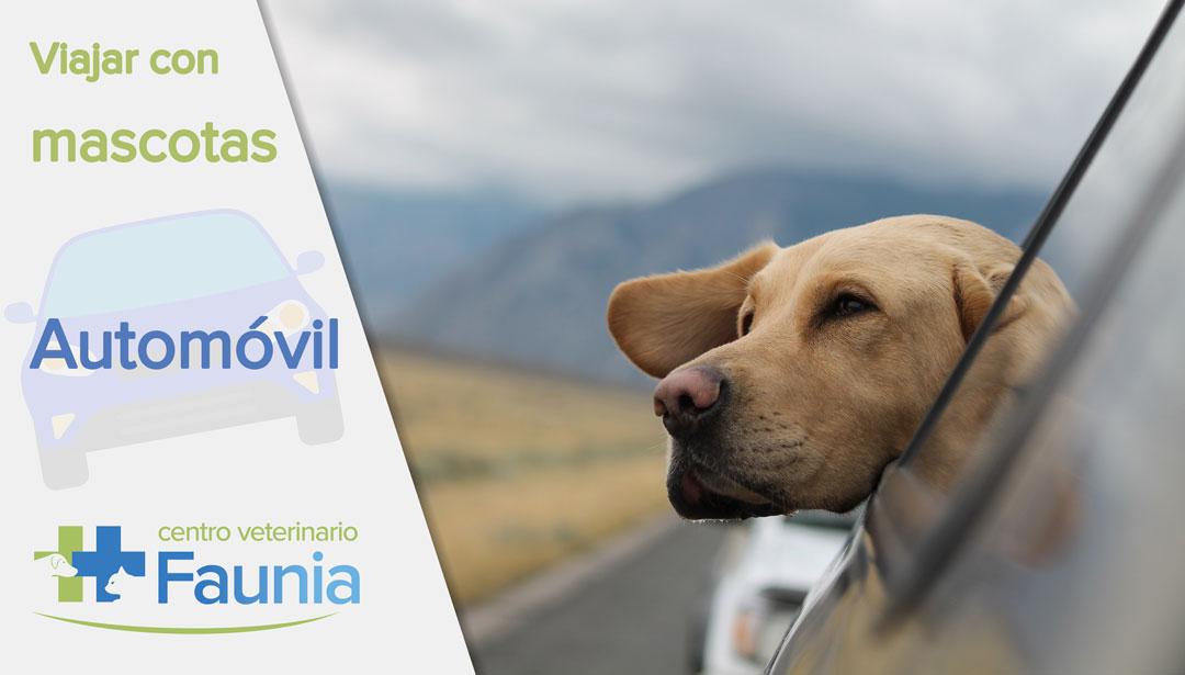 viajar con mascotas - automovil