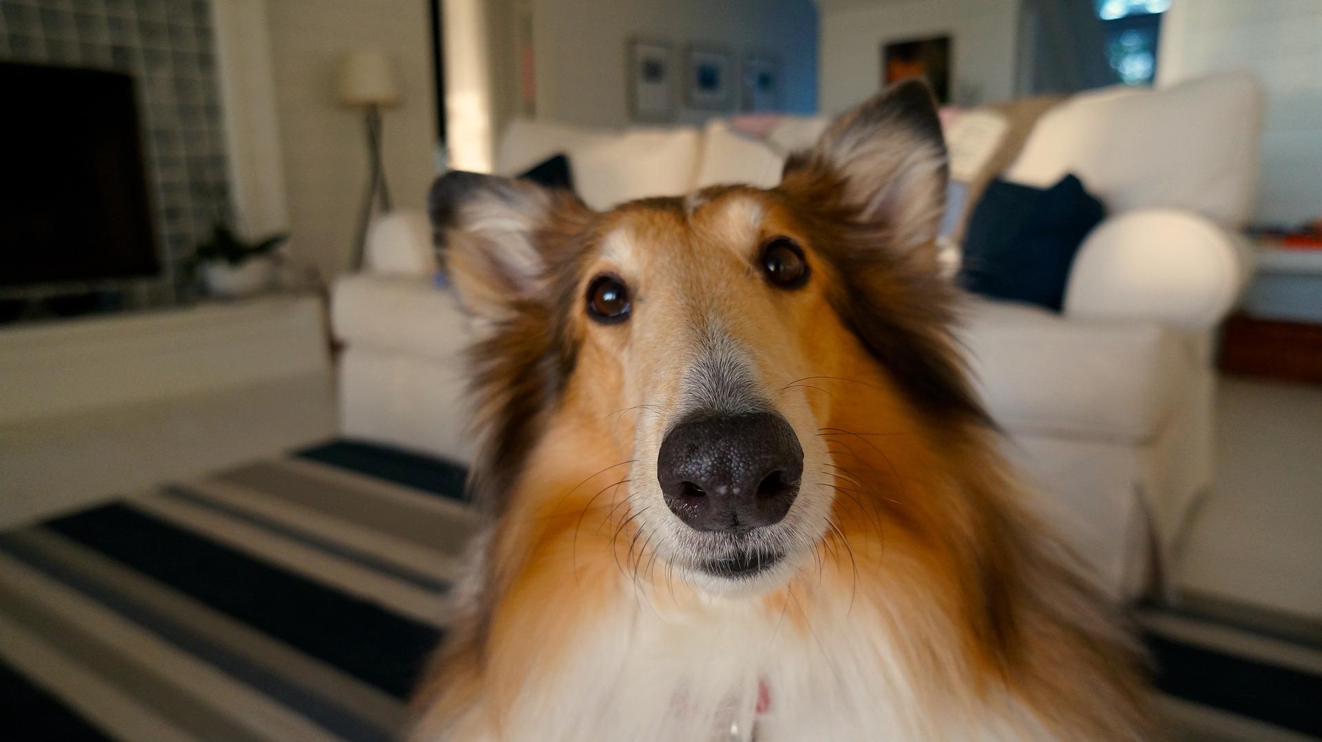 dog-705820_1920