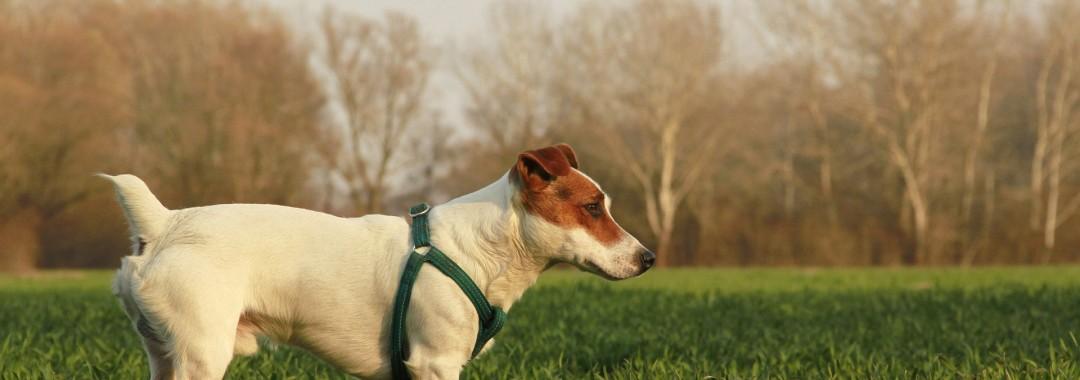 dog-1653836_1920