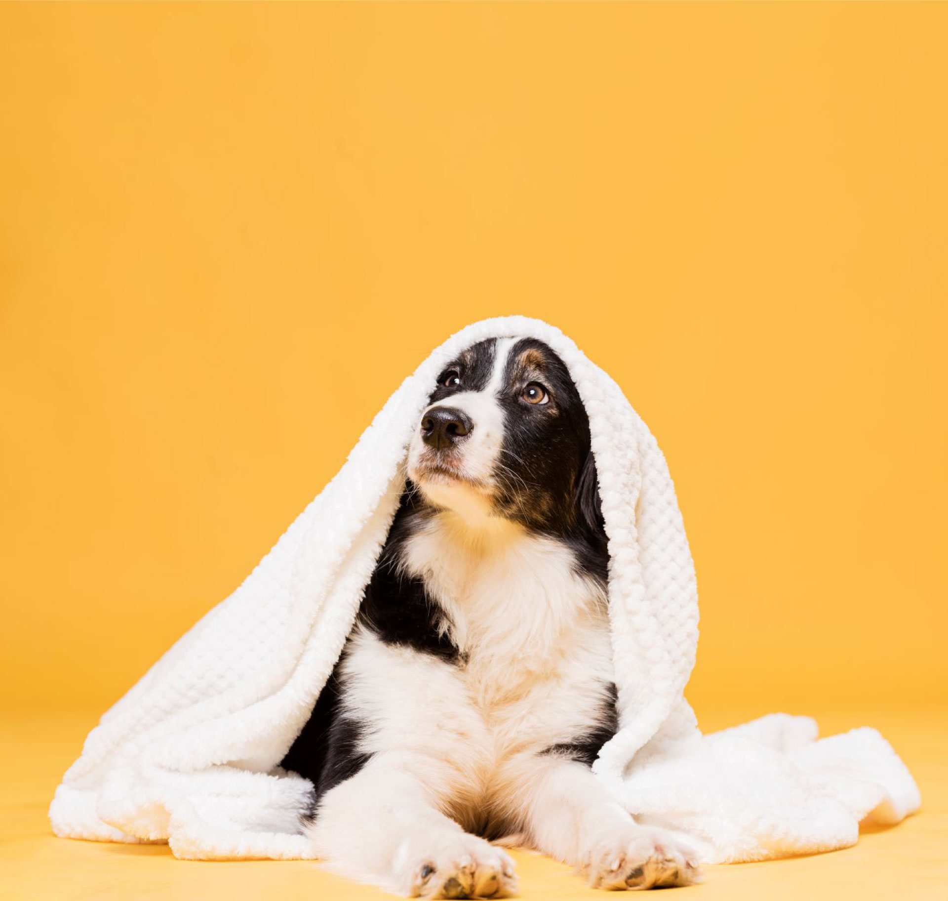 cute-dog-with-towel